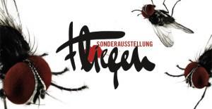 """Mehr als ekelige Insekten: """"Fliegen"""". Eine Ausstellung im Naturkundemuseum Berlin"""