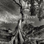 Beth Moon_Ancient Trees