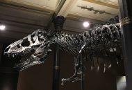 Tyrannosaurus rex Tristan Otto