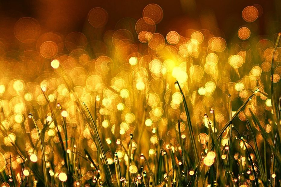 goldfarbenes gras